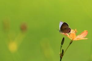 butterfly-521413_1280